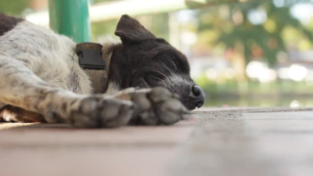 a hot, panting, tired homeless street dog sleeping under a bench next to a lake in a rural town in Northern Thailand a hot, panting, tired street dog sleeping under a bench next to a lake in a rural town in Northern Thailand panting stock videos & royalty-free footage