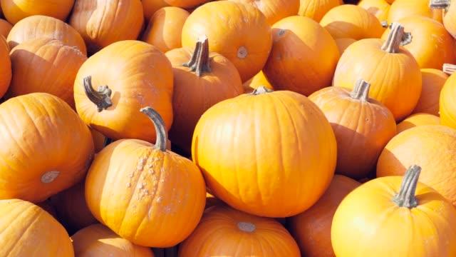 a lot of different pumpkins - pumpkin стоковые видео и кадры b-roll