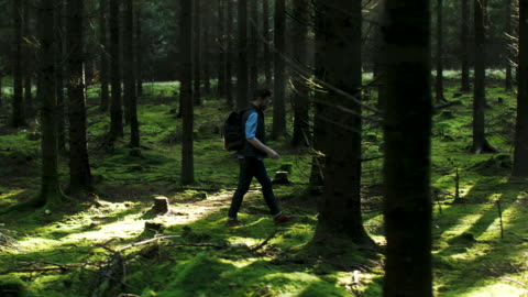 a man walking in the forest A man hiking in the forest, carrying a vintage backpack with coffee. dolly shot stock videos & royalty-free footage