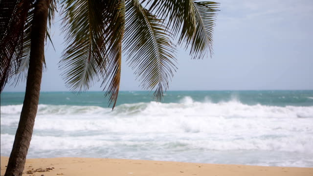 a palm tree on the shore of the ocean. tropical paradise video
