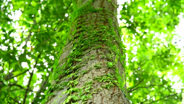 a parasitic vine wrapped around a tree To rely on water and sunlight for living, The concept of life depends on each other1
