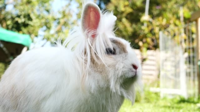 a rabbit in a backyard