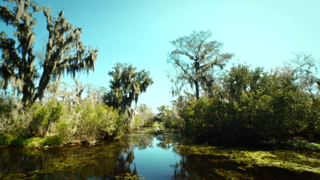 NEW ORLEANS - MARCH 2014, a shot of the Bayou taken from a boat video
