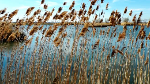 bir tarlada sazlıklarda küçük bir göl.izleme atış - sale stok videoları ve detay görüntü çekimi
