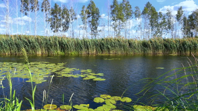a Small River Overgrown With Reeds on a Sunny Day video