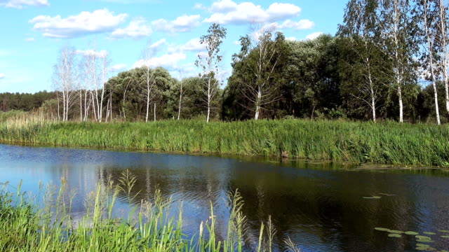 a Small River, Overgrown With Reeds video