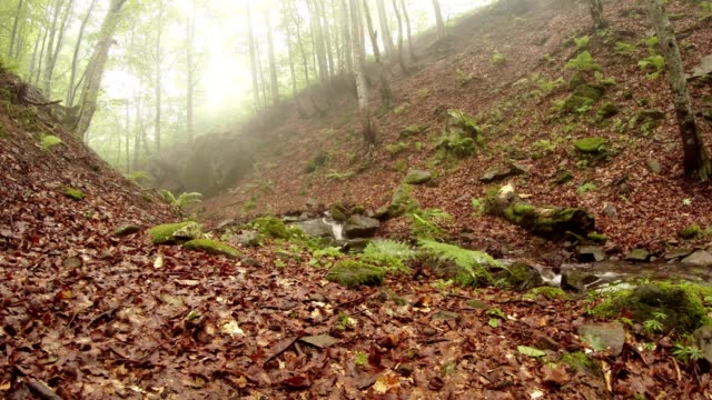 a Small Stream Flows in The Middle of a Misty Forest in the Mountains video