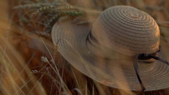 a straw han lies on th wheat at sunset. concept of harvesting, end of summer video