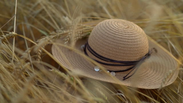 a straw hat lies on wheat at sunset. concept of harvesting, end of summer video