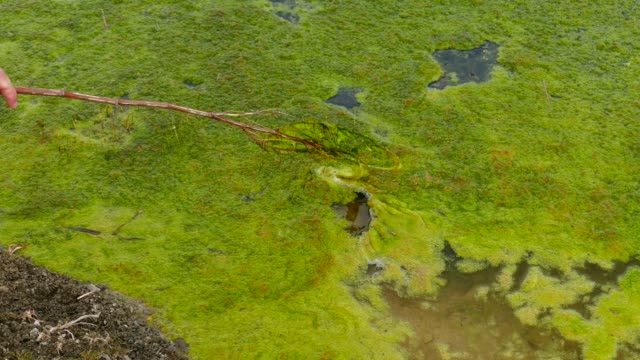a swampy area filled with green moss, - pond stock videos & royalty-free footage