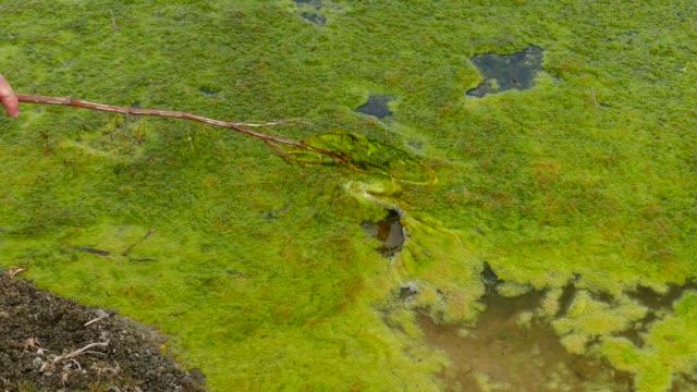 ein sumpfiges gebiet, gefüllt mit grünem moos, - algen stock-videos und b-roll-filmmaterial