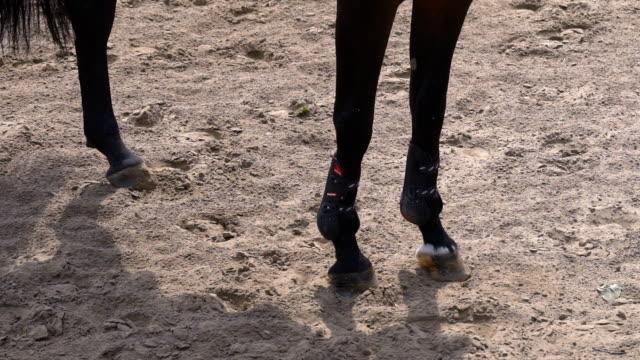 vidéos et rushes de un étalon pur-sang traverse le domaine. gros plan de sabots. coureur de fille un cheval sous la forme d'un avenant. journée ensoleillée. ralenti 4k - sky