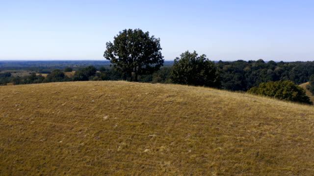 bir tepede bir ağaç - drone havadan atış - sale stok videoları ve detay görüntü çekimi