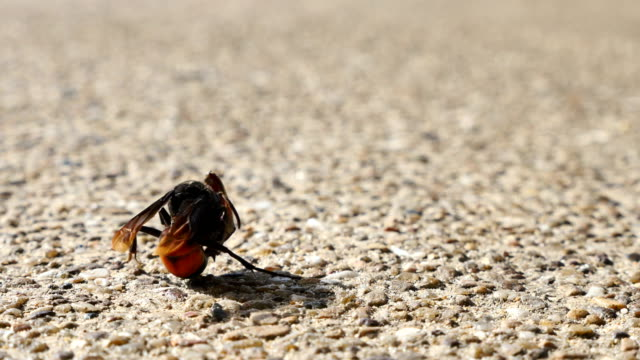 a wasp eating a dead bug video