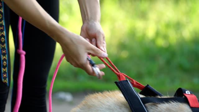 a woman wears a leash for husky - cane husky video stock e b–roll
