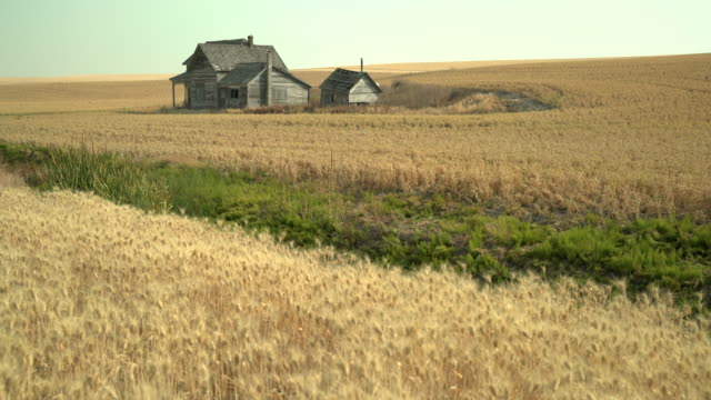 Abandoned Farmhouse, Palouse, Washington State 4K. UHD. Abandoned buildings dot the landscape in the Palouse area of Washington State, USA. 4K. UHD. abandoned stock videos & royalty-free footage