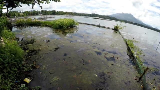 övergivna, ruttna bambu strukturer på förorenade sjön - rådig bildbanksvideor och videomaterial från bakom kulisserna