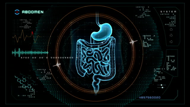 abdomen Scan data interface. video