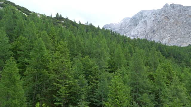 aerial above the fir tree forest ion the mountains - jodła filmów i materiałów b-roll