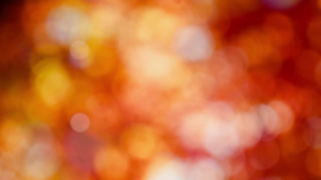 vídeos de stock, filmes e b-roll de resumo bokeh de fundo outono vídeo - pink october