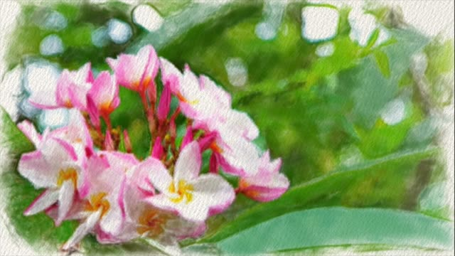 Abstract  backgrounds of Frangipani flowers  , water color painting style