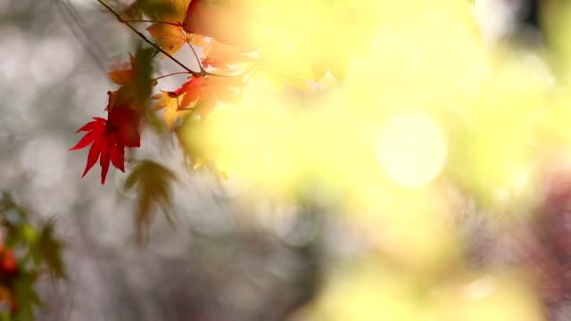 抽象的なぼやけた背景: 秋赤まま小原トヨタ名古屋 - トヨタ点の映像素材/bロール