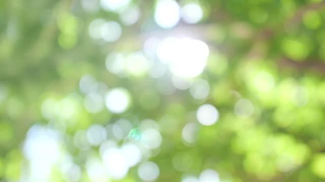 vídeos y material grabado en eventos de stock de fondo bokeh abstracto de hojas verdes. - esperar