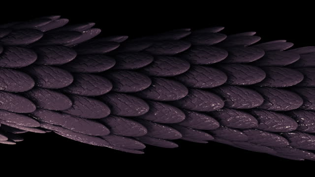 Abstract elegant purple moving tube of many feathers covered by sticky substance on black background, seamless loop. Animation. Many small oval shaped feathers video