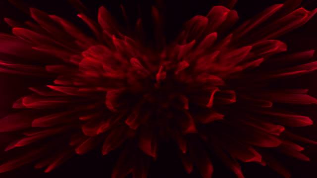 abstrakt fraktal bakgrund som blommiga kronblad - blommönster bildbanksvideor och videomaterial från bakom kulisserna