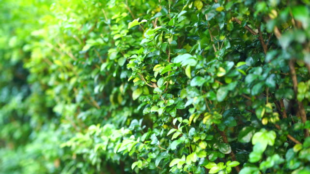 abstract lush foliage background