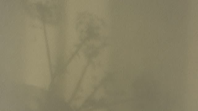 Abstract moving shadows on the wall Abstract moving shadows on the wall. A light morning breeze stirs the transparent tulle and flowers on the window. Monochrome shadow pattern on the beige texture of the wall. Natural background botany stock videos & royalty-free footage