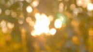 istock Abstract nature bokeh background 874410274