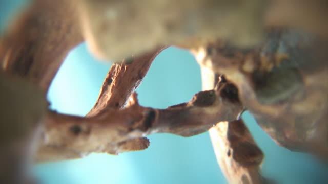 Abstrakte Bio-Hintergrund. Rotierende Baumwurzeln loop 06 – Video