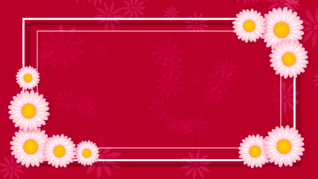 Abstract pink background with frame and white flowers Abstract pink background with frame and white flowers floral pattern stock videos & royalty-free footage