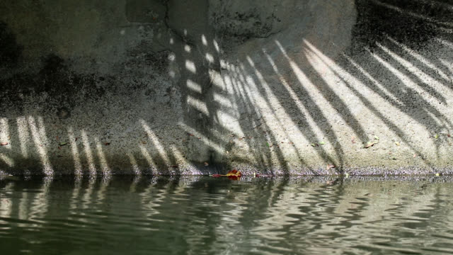 Abstract shadow of Chinese fan palm tree leaves on canal wall and water Moving abstract shadow of Chinese fan palm tree leaves on old canal concrete wall and water jul stock videos & royalty-free footage