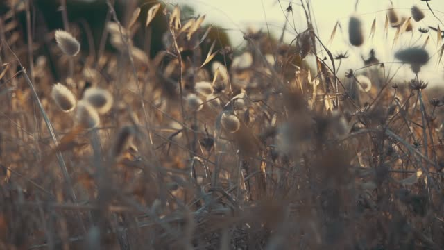 Abstract shots of grass with a shallow depth of field. video