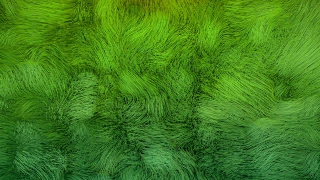 4k abstract underwater kelp fur. - algen stock-videos und b-roll-filmmaterial