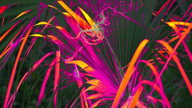 Abstract Video of Palm Leaf with Inverted Color Everglades National Park in Florida USA