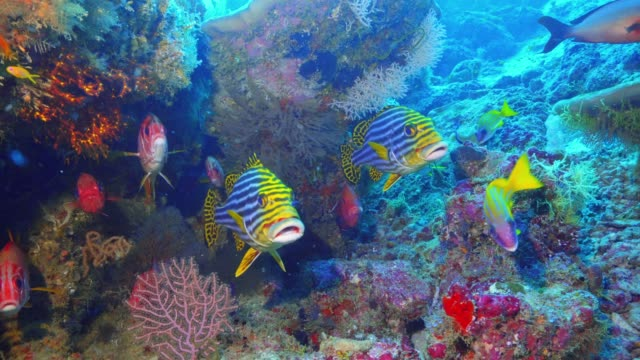 vídeos de stock, filmes e b-roll de abundância de vida no recife maldiva - equipamento de esporte aquático