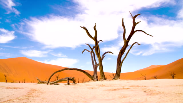 DS WS Acacia In The Dead Vlei video