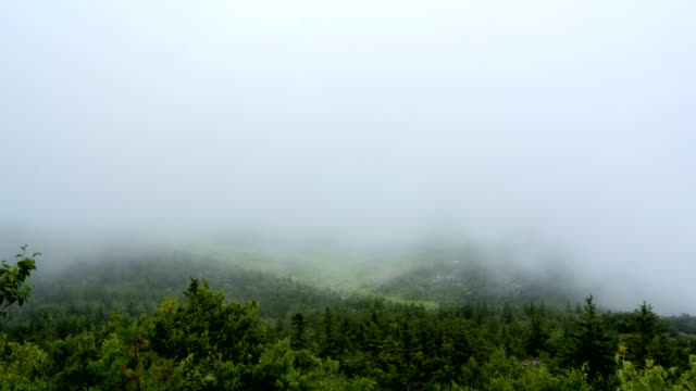 Acadia national Park in Fog video