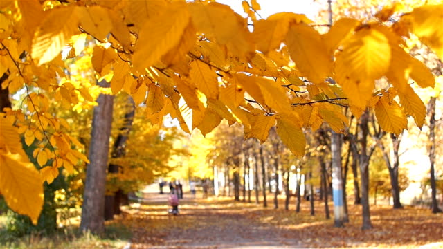 Accelerated filming. People walk in the park avenue. Autumn, beautiful time. video