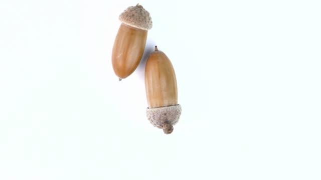 ekollon av en ek på en vit bakgrund. natur. video. bakgrundsbild. - ancient white background bildbanksvideor och videomaterial från bakom kulisserna