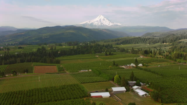 AERIAL Across an agricultural land with Mt. Hood seen in the distance