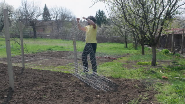 Active senior man taking care of the vegetable garden. Lifting up the fencing around the plowed field to keep it protected form animals.