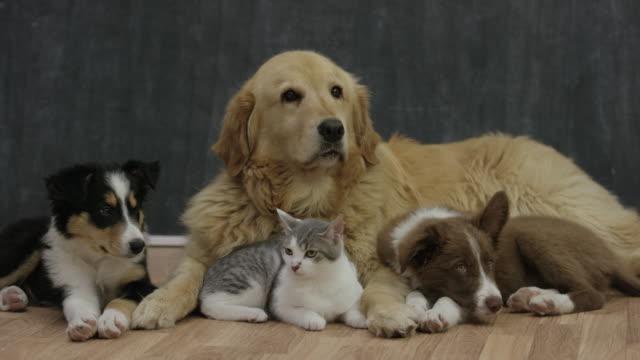 anta en ny vän - katt inomhus bildbanksvideor och videomaterial från bakom kulisserna