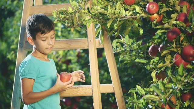 Adorable boy is picking apple fruits from apple tree. Copy space. Boy is showing his thumb up. Slowmo. Slow motion. 4K.