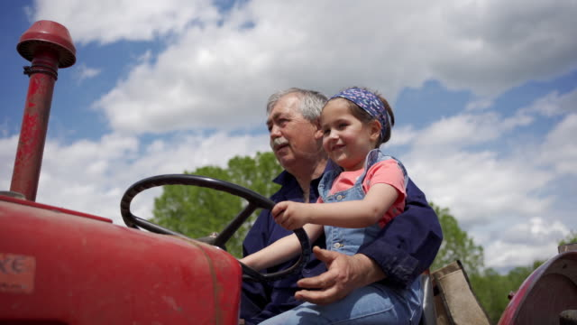 Adorable girl exploring a family ranch with her granpa on a tractor Curious little girl driving a tractor with her grandfather on their organic family farm and she enjoy it activity stock videos & royalty-free footage