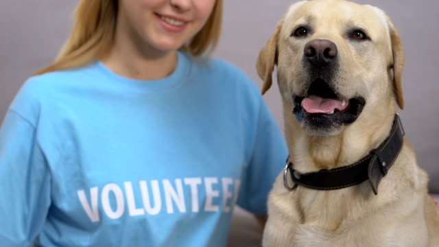 Adorable labrador and female volunteer closeup, dog shelter charity, animal care