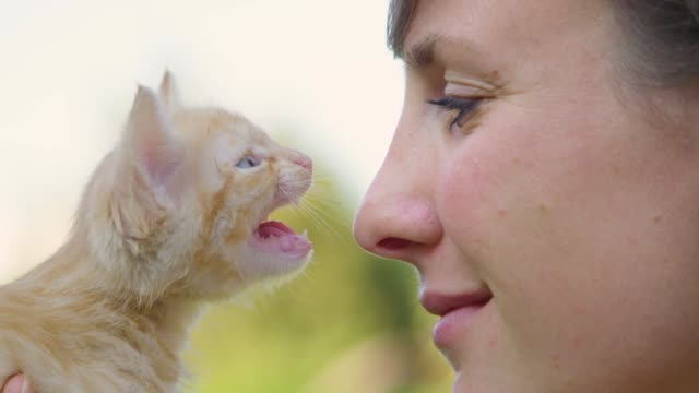 CLOSE UP: Adorable orange tabby kitten meows and touches the young woman's nose.